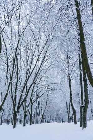 snowbound: Fabulous winter background with snowbound alley. Stock Photo