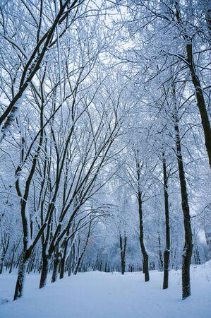 積雪の路地と素晴らしい夜冬の背景