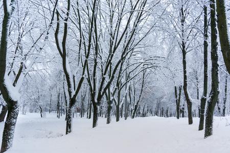 snowbound: Fairytale winter background with snowbound walk way Stock Photo