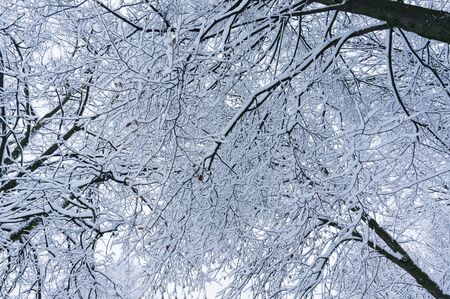 Fairytale winter background with tree branches in the sky