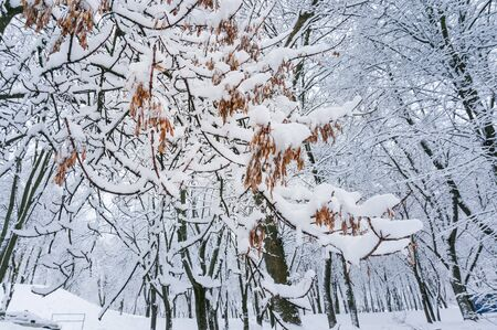 メープルの枝とおとぎ話冬の背景