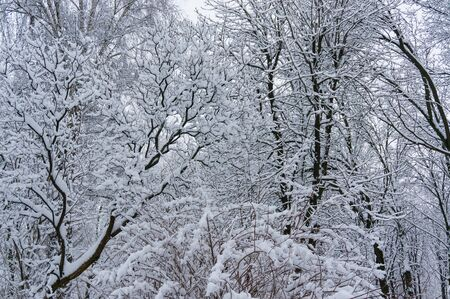 木の枝を Faifytale 冬の背景 写真素材