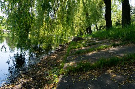 夏の晴れた日に都市の古い小さな湖の海岸。 写真素材