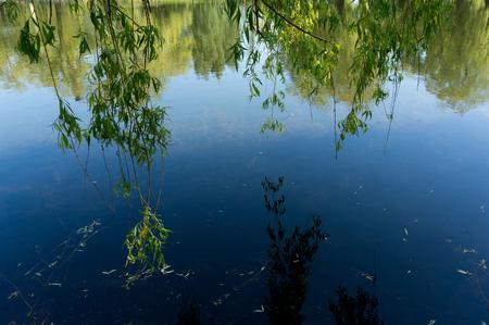 水面に空と柳の枝の反射。