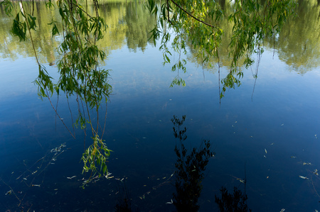 Reflection of the sky and willow branches in water surface.