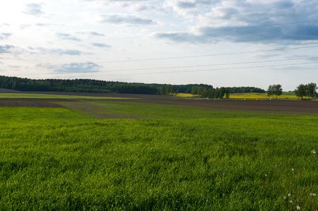 夏の田舎の風景。グリーン フィールド