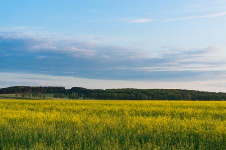 春の田園風景の景観開花レイプ。