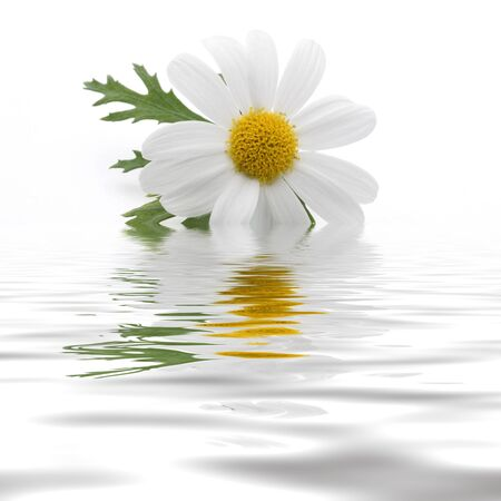 Daisy with reflection on water