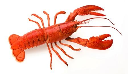 nutriments: una langosta roja sobre un fondo blanco