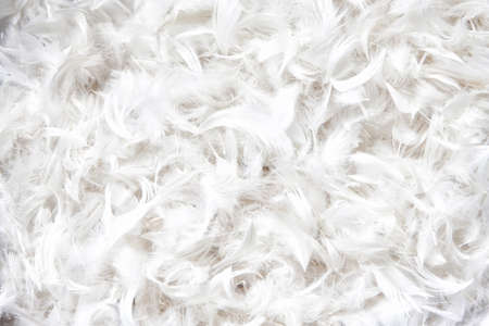 weightless: soft, weightless, gentle bird plumage texture for pillow