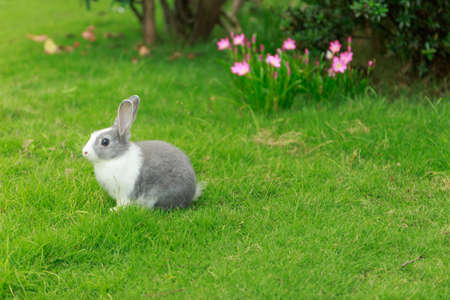 subspecies: little rabbit run on grass