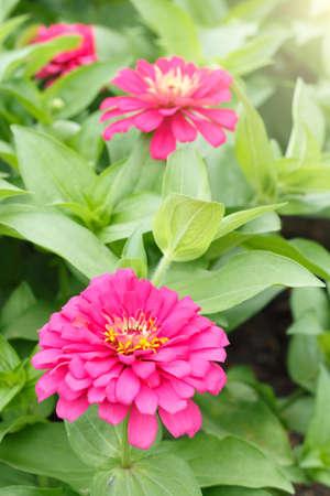 Flower and sunlight Stock Photo