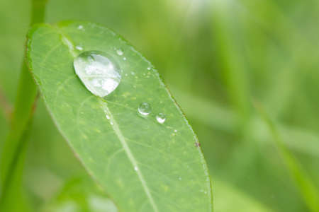 buble: buble water drop on leaf