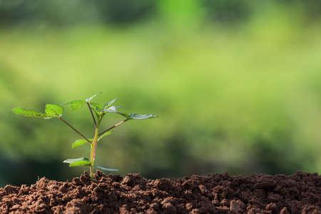 zaad wortels van jonge planten en zonlicht
