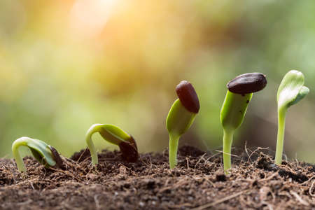 plant growing: seed root on soil with sunbeam begining concept