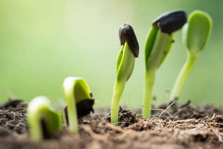 root seed on soil with sunbeam begining concept photo