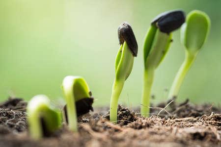wortel zaad op de grond met begrip zonnestraal begin
