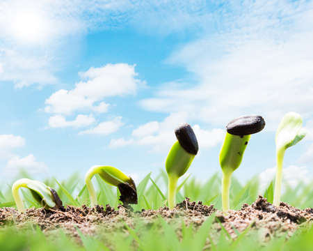 begining: spring season seed root on soil with sunbeam begining concept Stock Photo