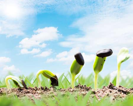 voorjaar zaad root op de bodem met zonnestraal begin begrip