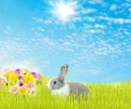 cute rabbit and beauty flower spring season background photo
