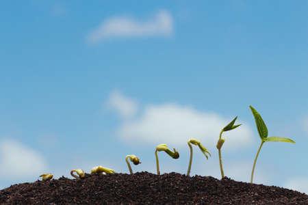 germinación: fila semilla que crece en suelo