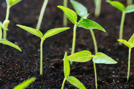 close-up groei van de landbouw jonge plant op de bodem Stockfoto