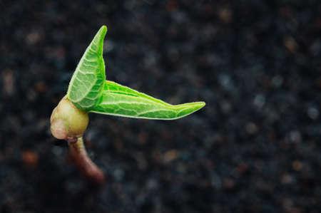 crecimiento planta: crecimiento de la planta verde en la temporada de primavera fondo del suelo