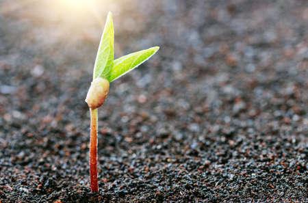 Plant groeit op de bodem lente seizoen achtergrond Stockfoto - 43540343