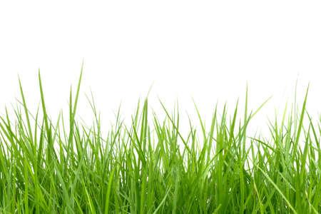 green grass isolated on white background Standard-Bild
