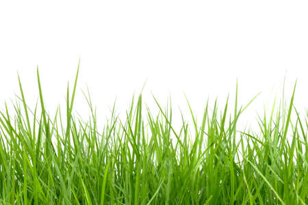green grass isolated on white background Foto de archivo