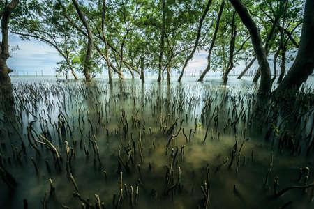 Scène van het mangrove de bos tropische landschap in Thailand, lang blootstellingsschot Stockfoto - 82569992
