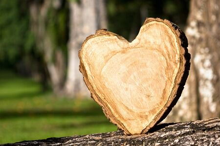 heart shaped: heart shaped from wood