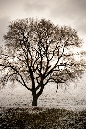 bare: a bare tree in winter on a gloomy day