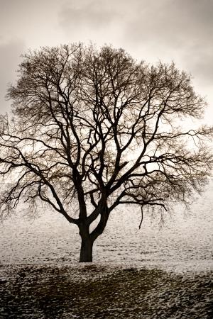 een kale boom in de winter op een sombere dag