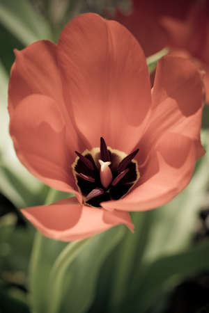 springtime is for tulips Stock Photo - 18877646