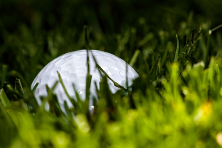 grass hiding a golf ball - macro landscape Stock Photo - 19454223