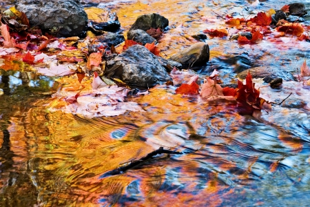 colorful reflections on water in autumn - fallen maple leaves being carried downstream photo