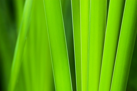 close-up of tall green grass in early summer Stock Photo - 20272182