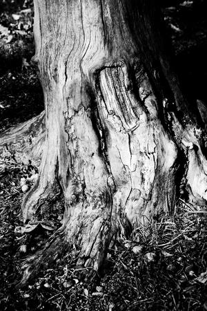 base of tree Stock Photo