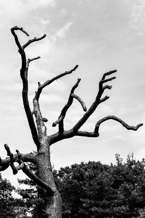 bare tree limbs in black and white