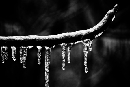 closeup of icicles on a tree branch in winter Stock Photo