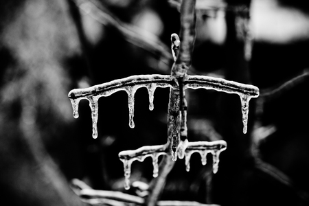 icicles on tree branches abstract