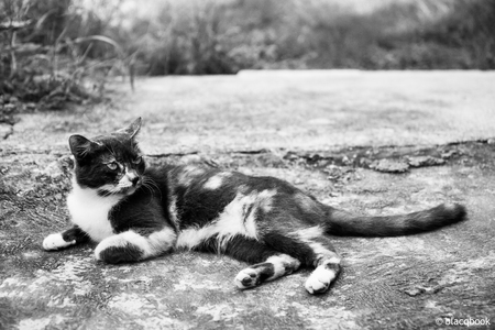 cat lying down on hot stone in the caribbean