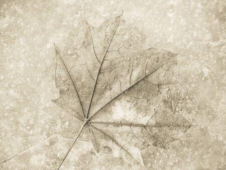 fallen leaf under ice surface in winter
