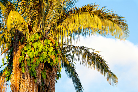 sunlit palm tree leaves against sky