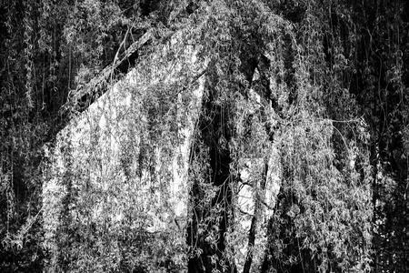 weeping willow and wood abstract Stock Photo