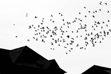 birds fly over rooftops of homes Stock Photo