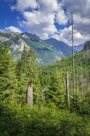 Poland. Tatra Mountains. Trail to Morskie Oko. Vegetation along the road, dead trees.