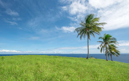 grassy: A bright grassy hill on top of a tropical island