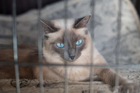 trapped: A cute white cat trapped behind bars